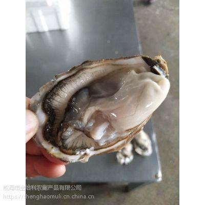 天津生蚝产地批发 鲜活海蛎子产地发货