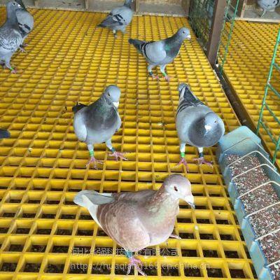 25mm公棚建造鸽子窝地面铺塑料地网多钱一平 漏粪板是加工定制 河北华强