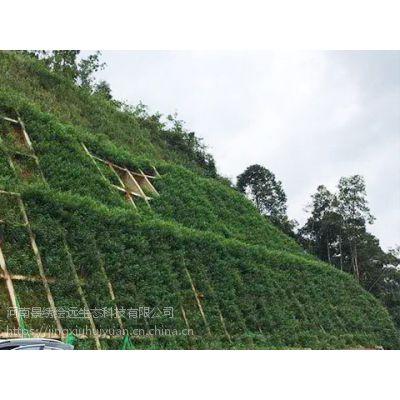 挂网喷浆多少钱一平方 喷播植草每平方造价 客土喷播技术规范-河南景绣