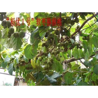 软枣猕猴桃生产基地、软枣子批发、东北大软枣子
