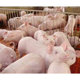 猪吃什么长得快 白金肽效果怎么样 白金肽什么价格