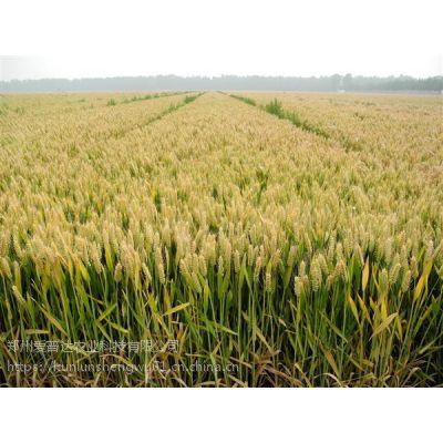 小麦控旺用什么药肥胖墩小麦控旺抗倒必备产品