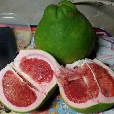 泰国红宝石青柚寻找大户合作种植,暹罗红心青柚
