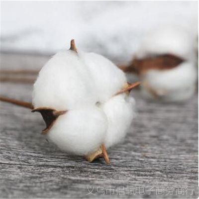 厂家直销手工单支天然棉花永生花工艺品室内装饰婚庆干花拍摄道具