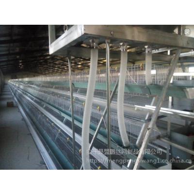 批发供应保温鸡舍设计安装 阶梯式三层蛋鸡笼 质量保证