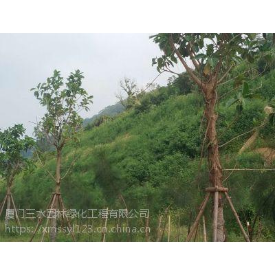 边坡生态修复灌木种子植被施工自贡承接