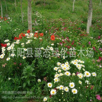 批发优质野花组合花籽 多品种景观花卉四季开花花卉组合 花卉花籽