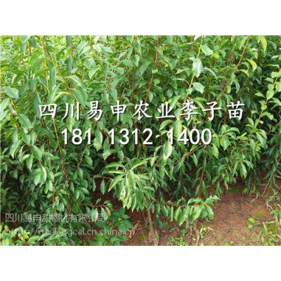 青脆李子苗种植基地,青脆李树苗价格多少钱