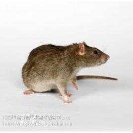 南昌灭老鼠公司,南昌灭鼠,南昌灭鼠公司
