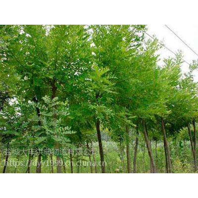 安徽哪里有国槐树 冠幅3米的国槐树多少钱?