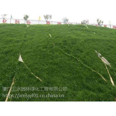 铜仁黑麦草能在冬天生长吗