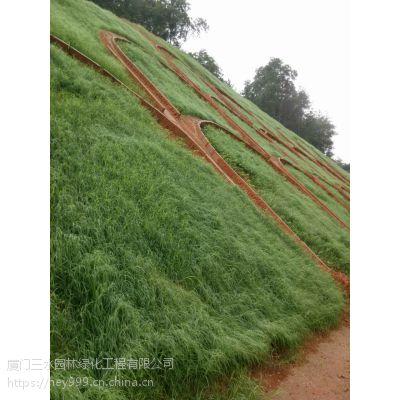 云南草籽基地直销大理地区边坡工程用草籽