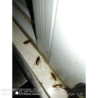 南昌灭蟑螂公司,红谷滩灭蟑螂,东湖区灭蟑螂公司