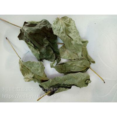 豆腐树叶/斑鸠叶/臭黄荆叶