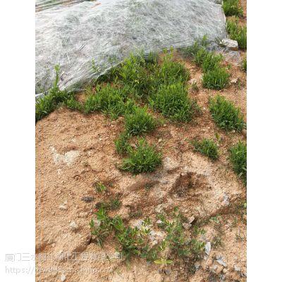 稳固绿化施工常用绿化草种子昆明寻甸县原产地