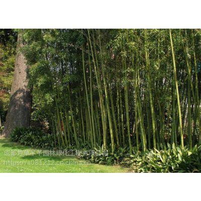 全国大量批发钢竹及其他苗木品种齐全