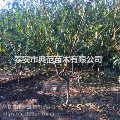 生态园桃树价格 生态园桃树