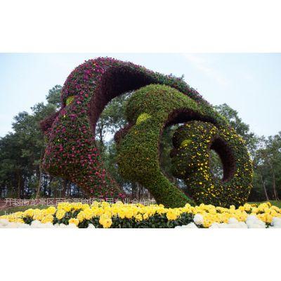菊花造型,菊展布展,盆菊,艺菊,造型菊,五色草种苗