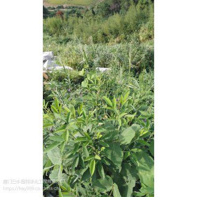昆明地区哪里可以找到速生绿化草籽边坡急用
