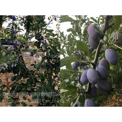 山东西梅女神李子苗适合哪些地区栽植?