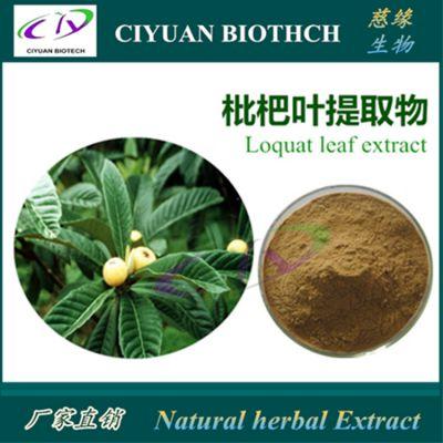 枇杷叶提取物10:1 Loquat Leaf Extract 慈缘生物 库存现货