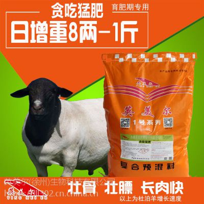 圈养羊的饲料·50斤以上的圈养羊催肥用