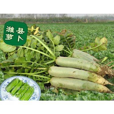 潍县萝卜产地 潍坊青萝卜产地批发
