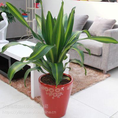 北京花卉租赁北京花卉销售绿植租赁公司