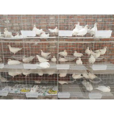鸽子笼托粪板 哪里有卖鸽笼的 鸽笼批发价格 安装简单吗?