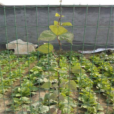 优质荷兰网 果园圈地围栏 圈玉米网