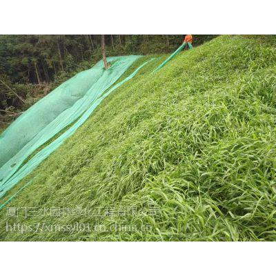 铜仁黑麦草这个季节播种多久能成坪