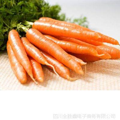 胡萝卜批发成都新鲜蔬菜厂家发货 种植销售批发学校供应食堂批发