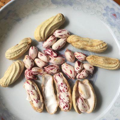 彝山香批发现挖现卖带壳原味云南新鲜七彩花生1千克