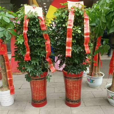 开业植物送什么-汉阳开业植物-花卉林婚庆花束(查看)