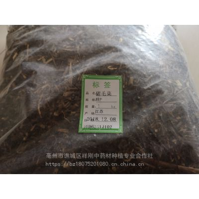 野生猪毛菜的功效@@@猪毛菜批发价格 猪毛菜药材批发网