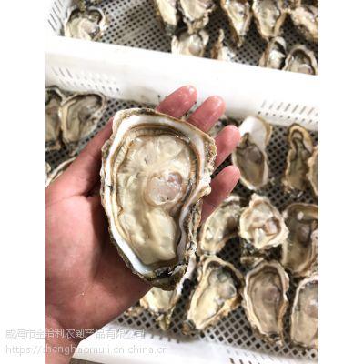 半壳牡蛎海蛎子批发 冻品牡蛎厂家加工