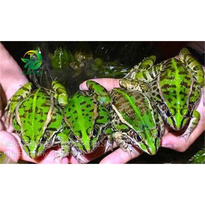 青蛙养殖前期需要做好哪些准备工作