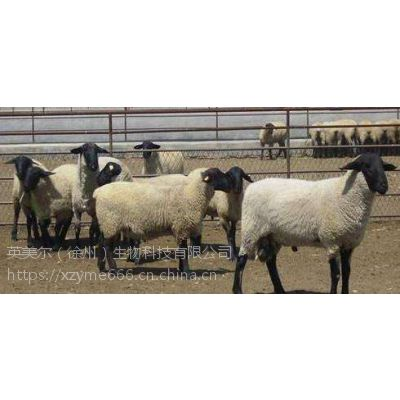 黑头萨福克羊饲料预混料(催肥育肥用)高性价比的萨福克羊饲料