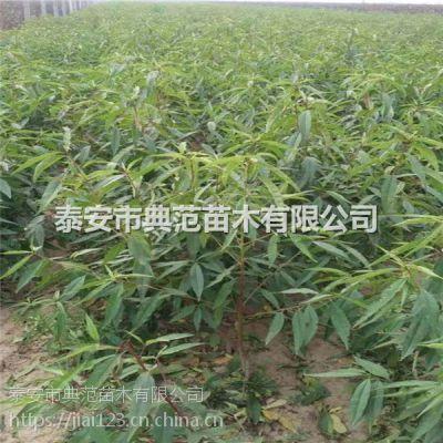 早熟桃树苗品种介绍 早熟桃树苗价格