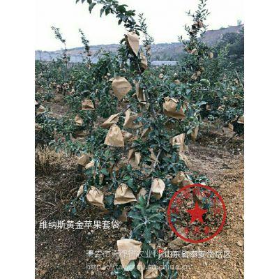 壹棵树农业 苹果树苗培育中心 苹果树苗哪里有卖的 品种纯正