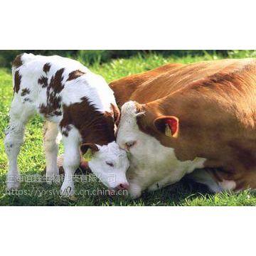 育肥牛吃什么长得快 育肥牛饲养方法 牛吃什么饲料长得快 白金肽