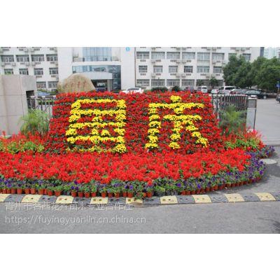 十月份开什么花,国庆菊花期到几月,国庆节花卉茗茜花卉