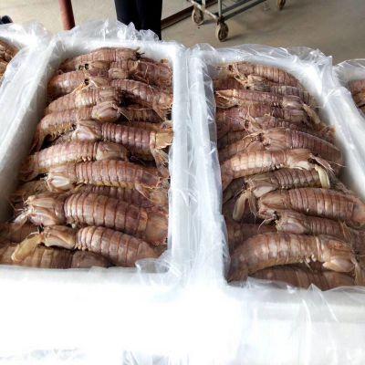 宝尔特隧道式 皮皮虾速冻机 虾爬子冻品 河鲜海鲜加工设备
