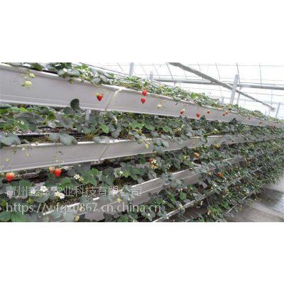 无土栽培草莓薄膜种植园/无土栽培草莓一亩地的产量比普通种植高多少/青州鑫泽温室