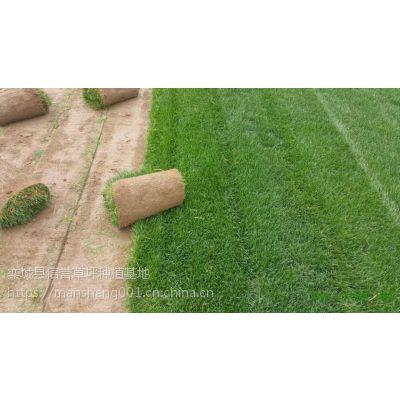 德州卖草坪|草坪卷规格|草坪草