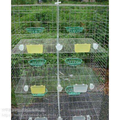 销售优质鸽笼 鸽子笼价格优惠 3层4列12位优质肉鸽笼
