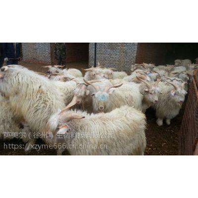 几款效果超好的绒山羊养殖饲料;优质绒山羊养殖饲料(效果试了就知道)