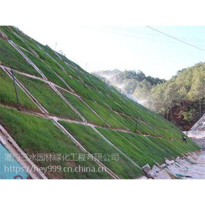生态护坡绿化工程专用种子昆明寻甸大量出售