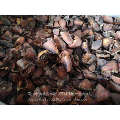 炙猪蹄甲的功效 猪蹄甲价格多少钱一斤