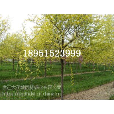 【垂柳树价格报价多少钱一棵】3公分4公分5公分6公分7公分8公分10公分15公分